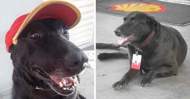 Брошенный у заправочной станции пес получил работу и любовь новых хозяев