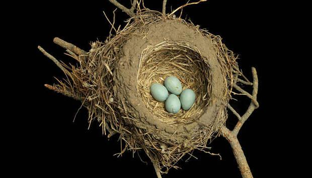 Шедевры природной архитектуры — птичьи гнезда