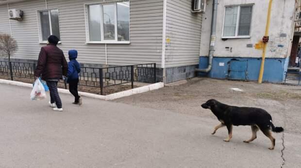 Бездомные собаки вГае покусали трех школьников