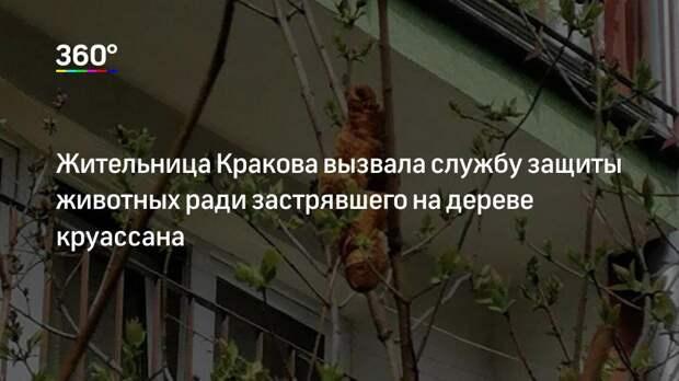 Жительница Кракова вызвала службу защиты животных ради застрявшего на дереве круассана