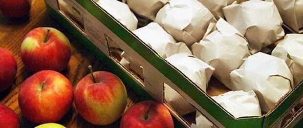 12. Хранение яблок еда, овощи и фрукты, продукты, советы, храним правильно