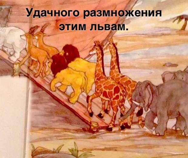Почему у льва есть грива, а у львицы – нет?