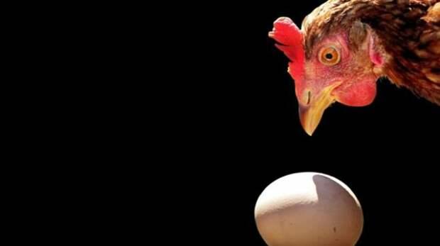 Что было раньше, яйцо или курица?