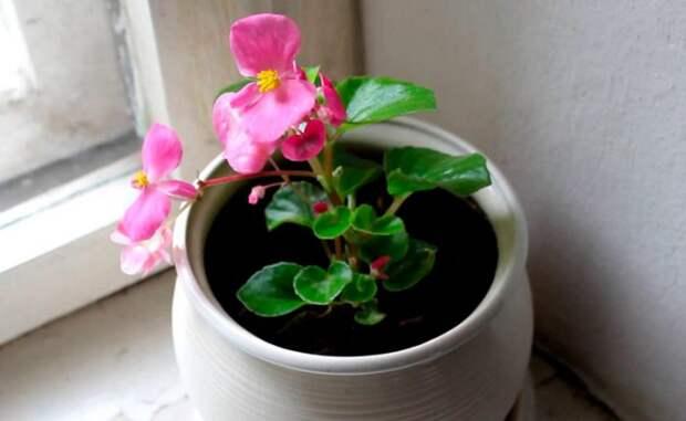 Благоприятные для спальни комнатные растения