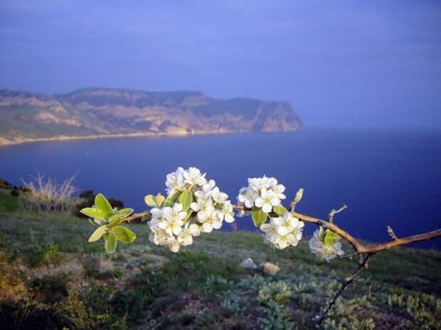 Туристам приглянулся Крым для отдыха на майские праздники
