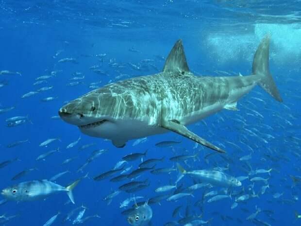 Акулы используют для ориентации магнитное поле Земли