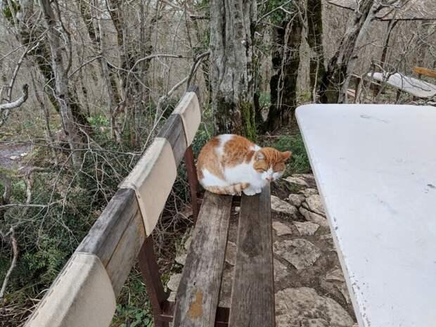 На отдыхе Хвостатые, братья наши меньшие, город, кот, кошка, улица, уличные кошки, эстетика