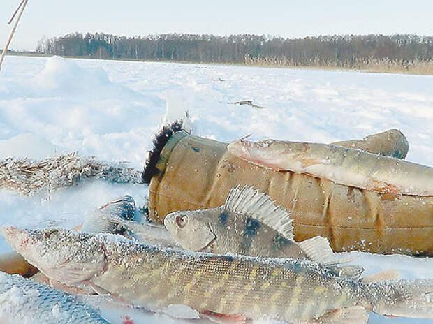 Фото: Владимир Супруненко.