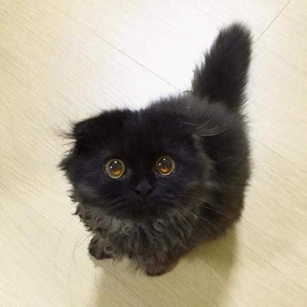 Удивительный котенок, которому никто ни в чем не может отказать
