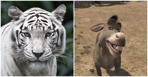 Фотогеничный осел затмил белого тигра