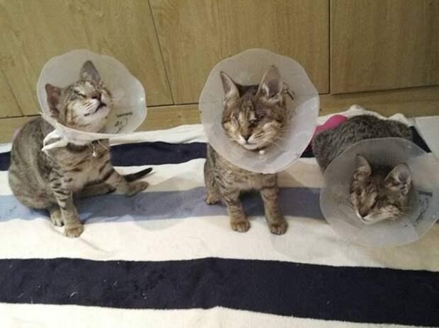 Троица слепых котиков ждала своего человека в приюте больше года…