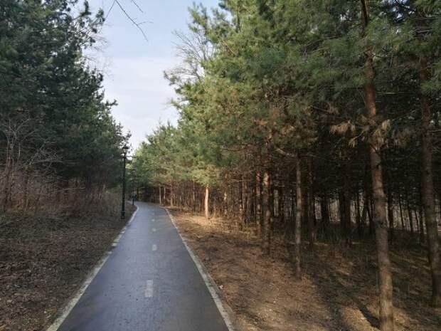 Неизвестный изнасиловал несовершеннолетнюю девушку в лесу в Подмосковье
