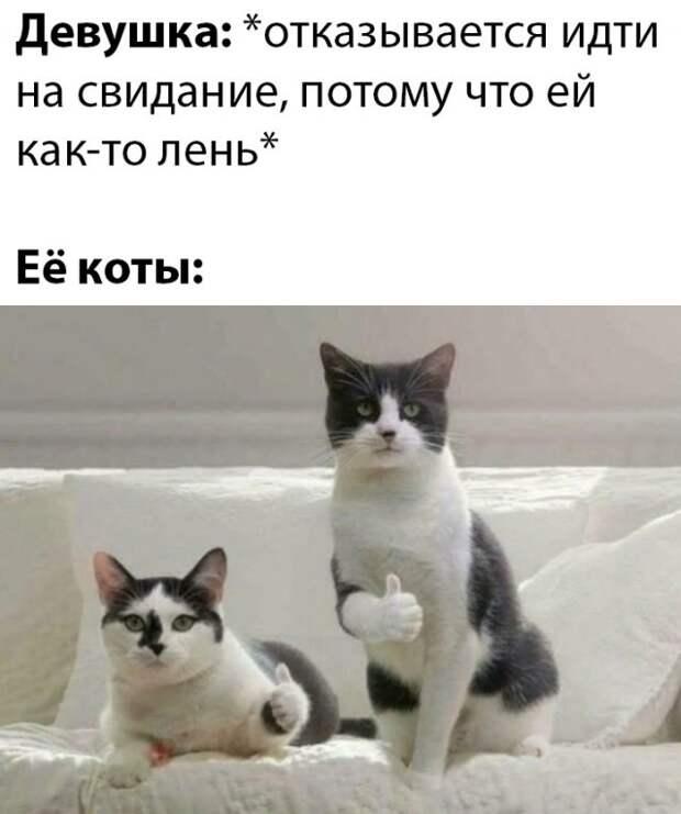 Коты и хозяйка