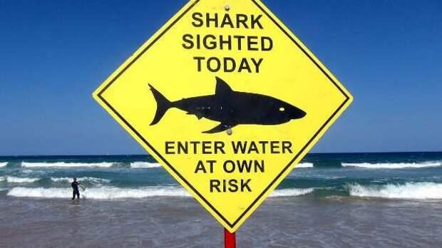 Австралия открыла список смертельных нападений акул уберегов страны вэтом году