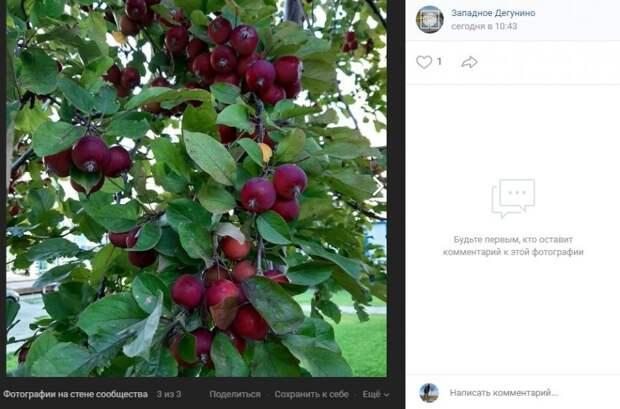 Фото дня: на Базовской созрели яблоки