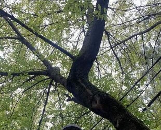 Ветки деревьев в Лианозовском могли обесточить весь парк
