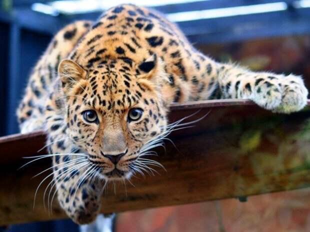 Животные, которых почти невозможно увидеть в дикой природе