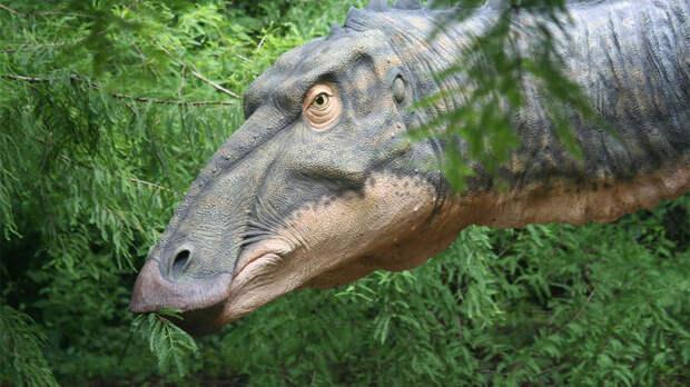 В США сняли на видео животное, похожее на динозавра