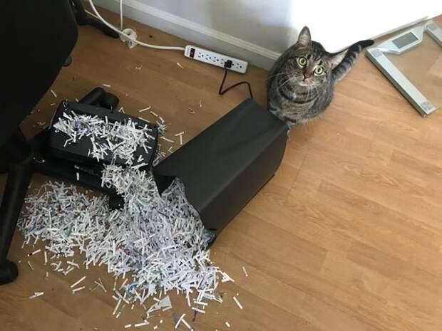 14 забавных котов и их проделки