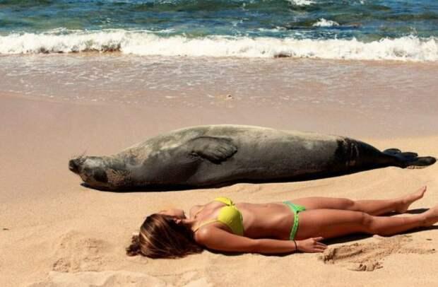 30 «убойных» пляжных фото, которые точно рассмешат дослез
