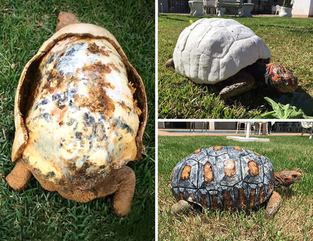 Раненая черепаха получила первый в мире 3D-панцирь Счастливый конец, животные, спасение