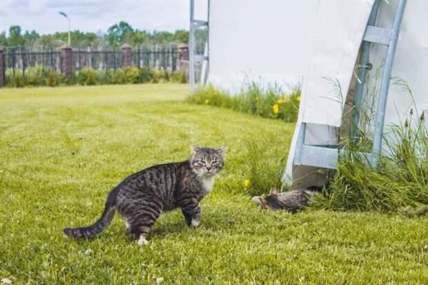 А второго видите? Хвостатые, братья наши меньшие, город, кот, кошка, улица, уличные кошки, эстетика