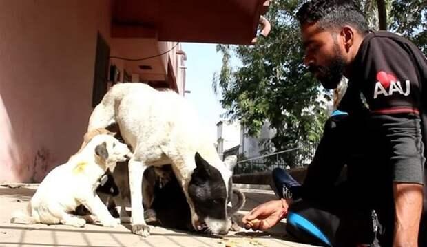 От отчаяния собака звала на помощь своему щенку людей