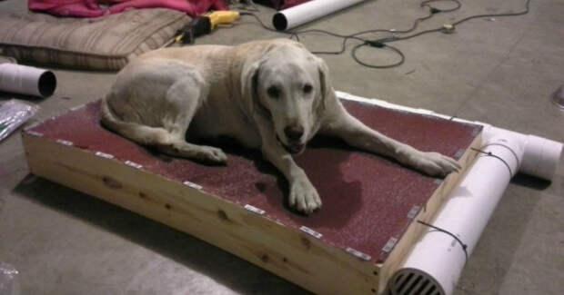 Старенькая собака искала, где укрыться от жары… Тогда её хозяин придумал, что делать!
