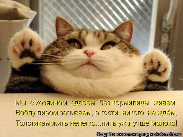 kotomatritsa_N (680x510, 256Kb)