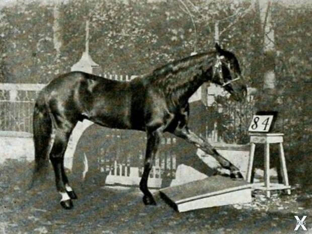 Проверка способностей Ганса, 1904 г....