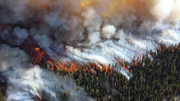 Лес превращается в пепелище