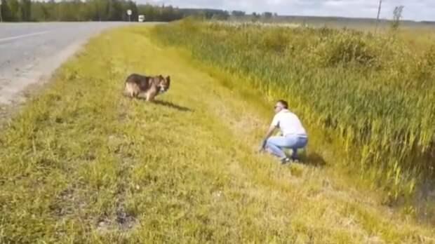 У дороги под Тобольском пес 11 лет ждет погибшего хозяина