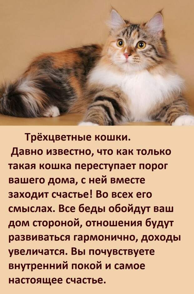 А ВЫ ЗНАЕТЕ, как цвет вашей кошки влияет на вашу судьбу?
