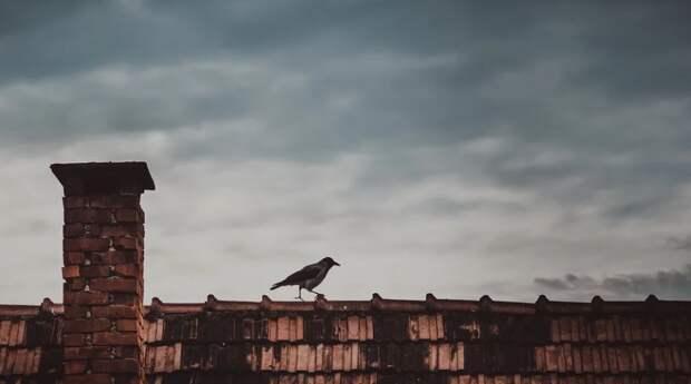 Крымскому институту сорвало крышу