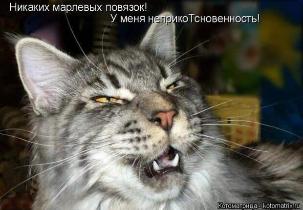 kotomatritsa_w (700x486, 305Kb)