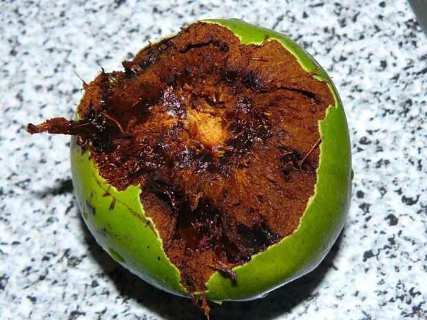 Черная сапота еда, фрукты, экзотика
