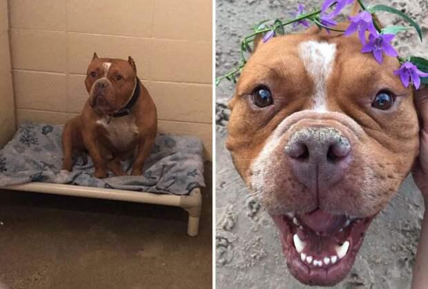 Фото собак до и после приюта