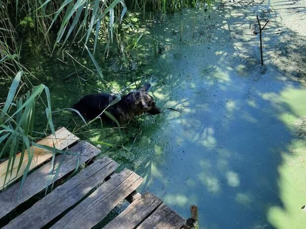 Поехать на рыбалку и найти клад! Парень выловил из пруда чистокровного щенка овчарки