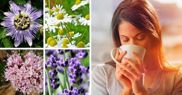 Лучшие травы для улучшения настроения и устранения стресса и бессонницы