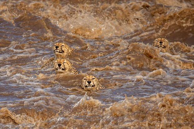 Великий заплыв. / Фото: Буддхилини де Сойза (Шри-Ланка / Австралия)