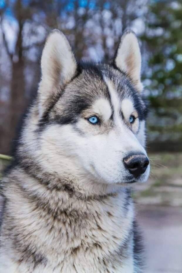 Невероятно красивый пес сам пришел проситься в приют