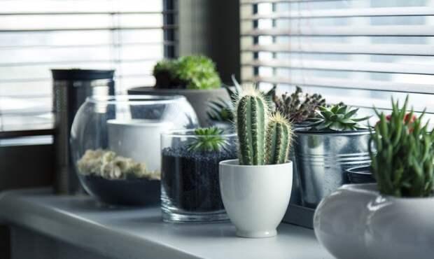 Читатели газеты «Лефортово» расскажут, что выращивают дома на подоконнике во время самоизоляции