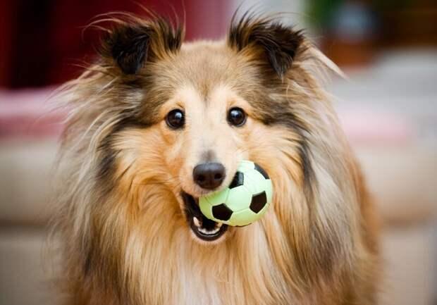 Собаки, которые заставят вас улыбнуться
