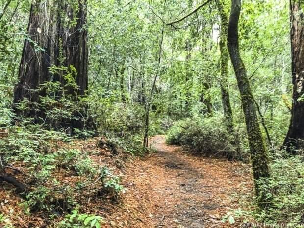 Из первых уст: Заблудиться в трёх секвойях, или Прогулка по парку Big Basin