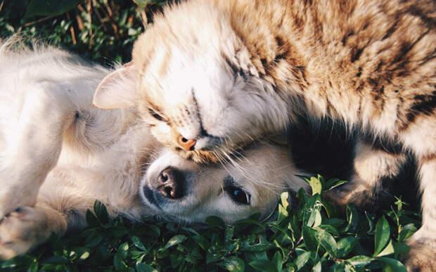 Кошки не меньше собак переживают потерю компаньона, а собаки одинаково сильно тоскуют как по ушедшей собаке, так и по кошке. Фото Free-Photos/Pixabay
