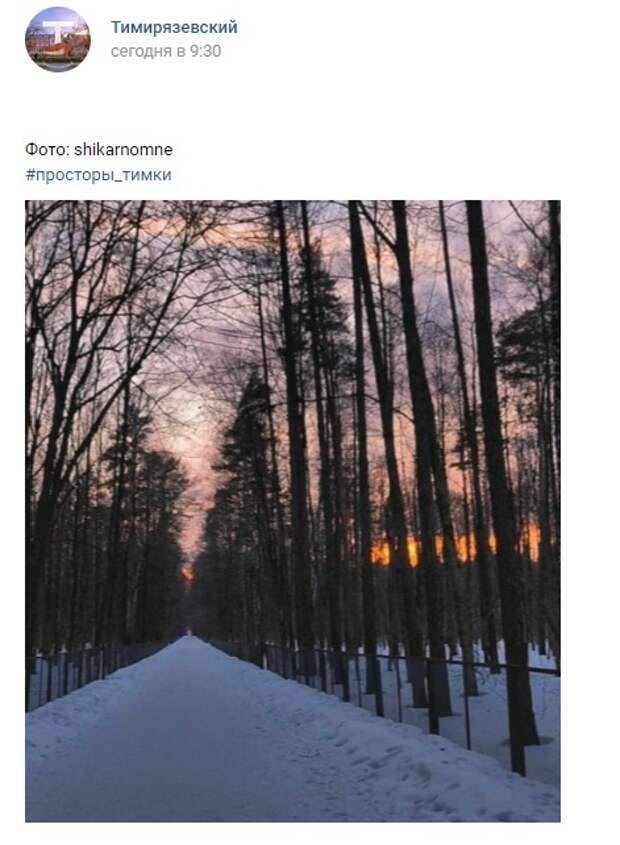 Фото дня: прекрасный Тимирязевский лес