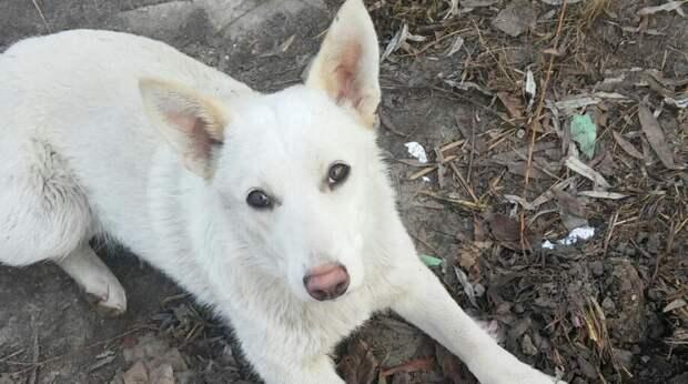 Бездомному щенку нашли дом, не зная, что новая хозяйка будет бить животное и морить его голодом