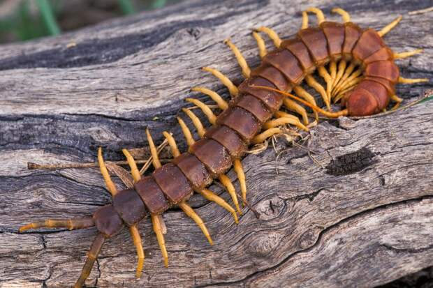 Если вы встретили дома насекомое со множеством ног, проверьте, не ли его в нашем списке