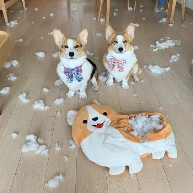 Забавные фотографии собак, которые вызывают улыбку