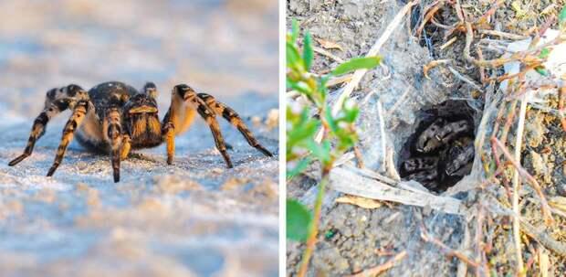 11 опасных существ, для встречи с которыми не обязательно ехать в Австралию